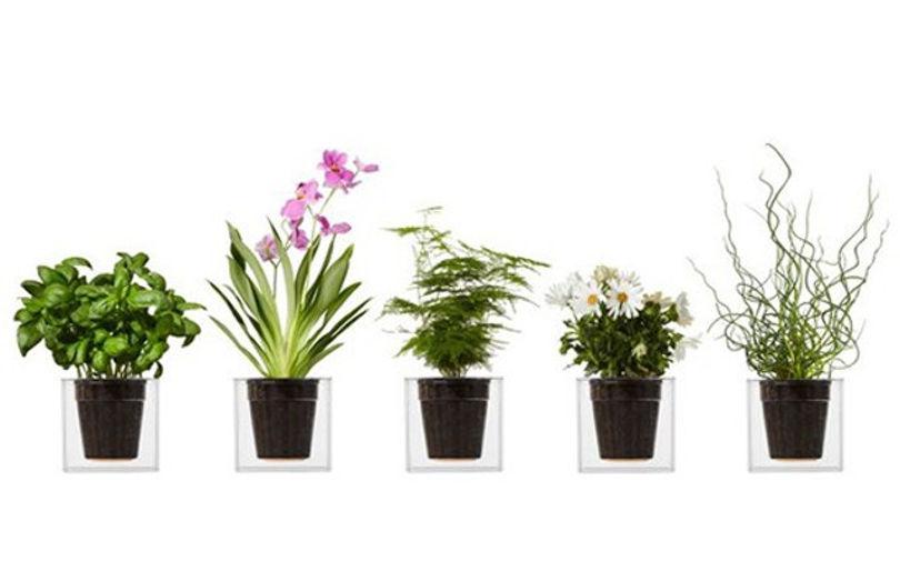 Автономные системы полива для офисных растений